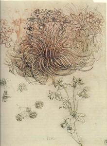 Leonardo-da-Vinci-Ornithogalum-Star-of-Bethlehem