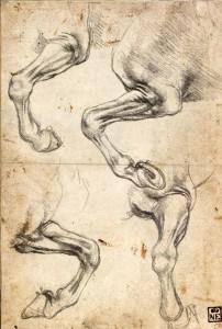Leonardo_da_Vinci_Studies_of_Horses_Leg